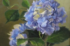 blue_hydrangeas