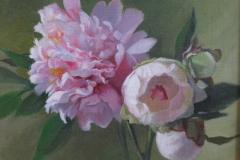 peonies_in_bloom_img_1985