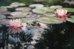 water-lilies-in-bloom